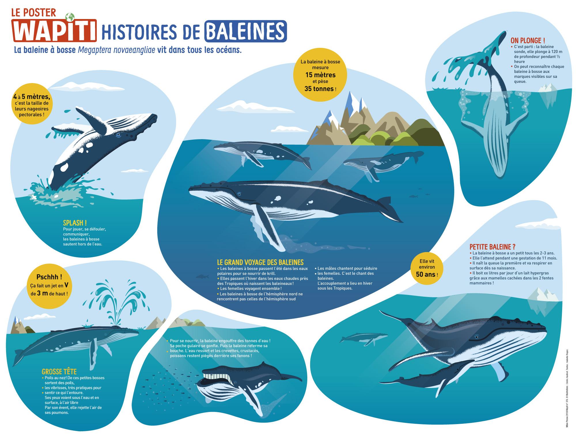 Poster : Histoire des baleines, Wapiti.