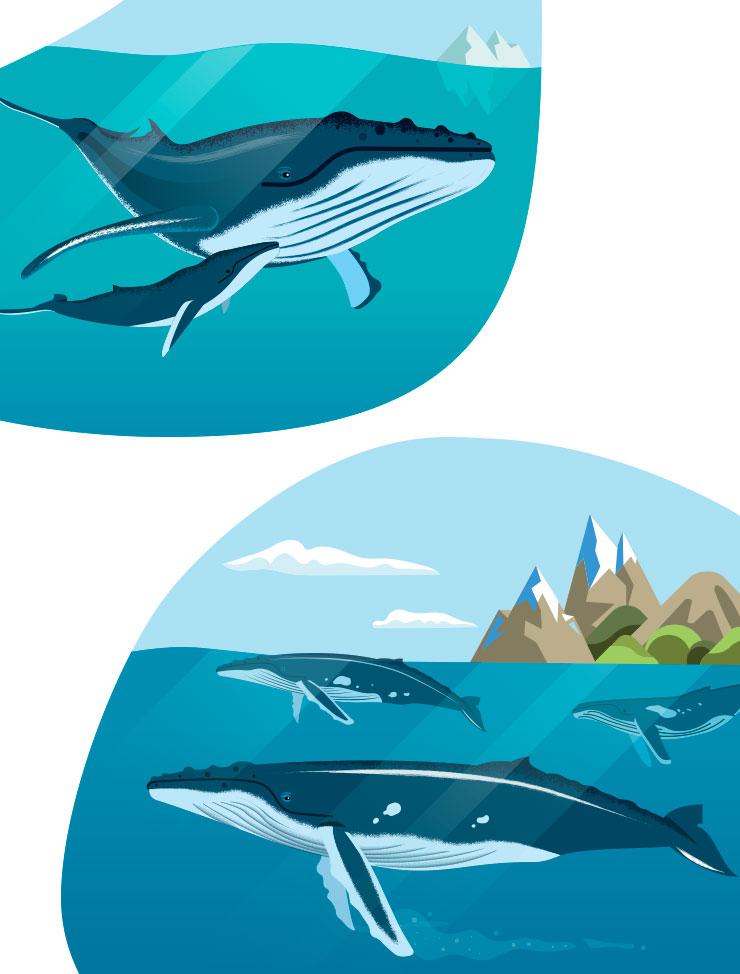 poster Wapiti : les baleines