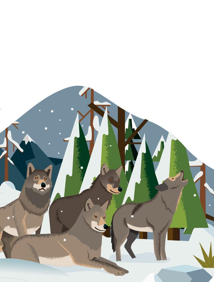 Poster wapiti : les loups