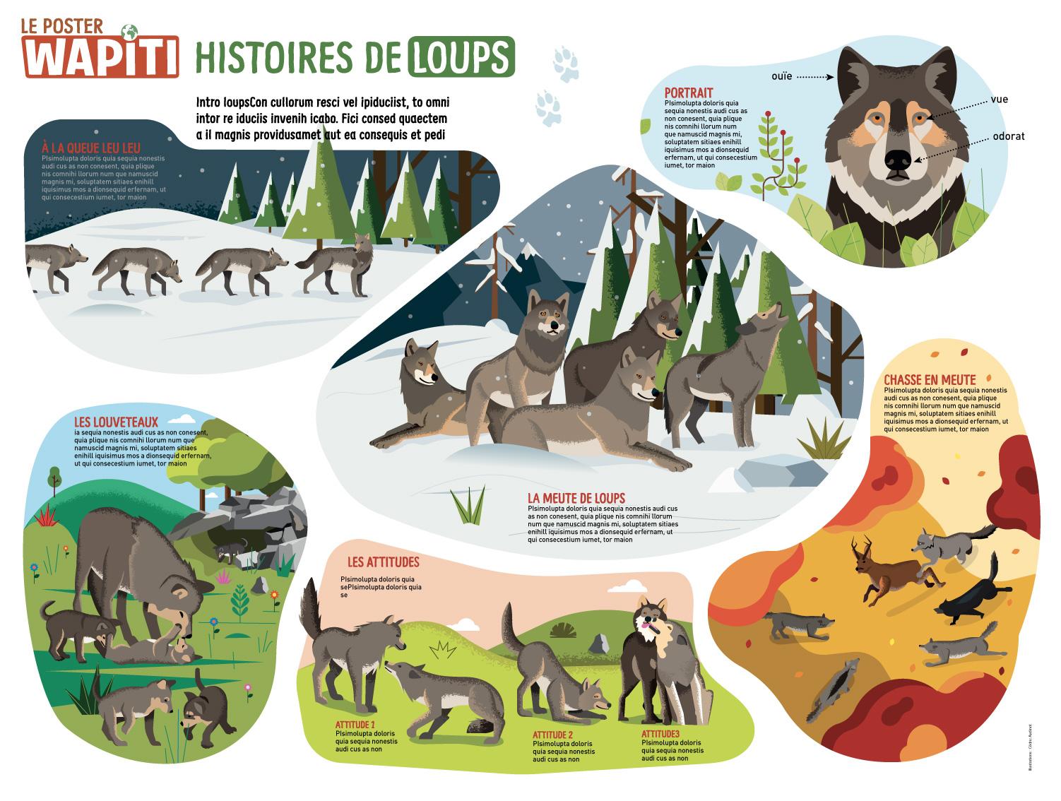 Poster : Histoire de loups, Wapiti.